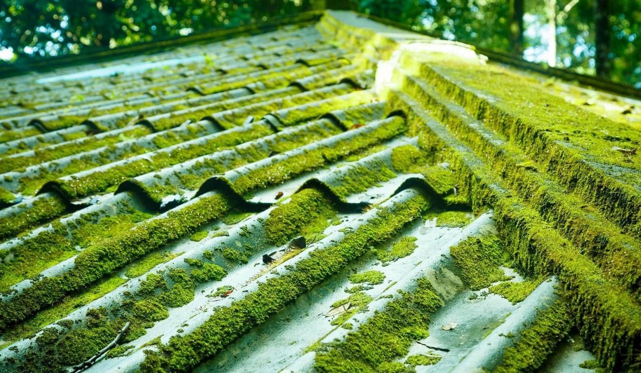 mech-na-blaszanym-dachu
