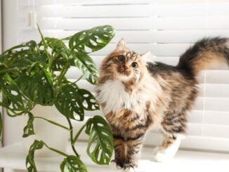 Rośliny bezpieczne dla zwierząt